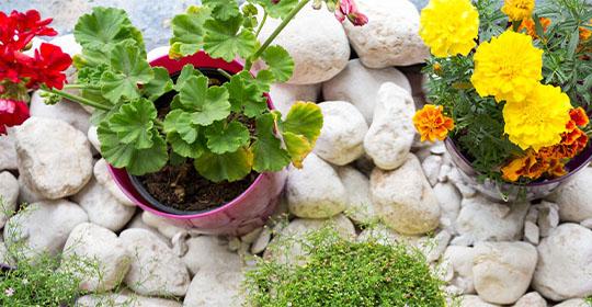 10 recomendaciones para el cuidado y belleza de su jardín